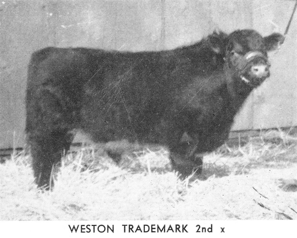 Weston Trademark 2nd