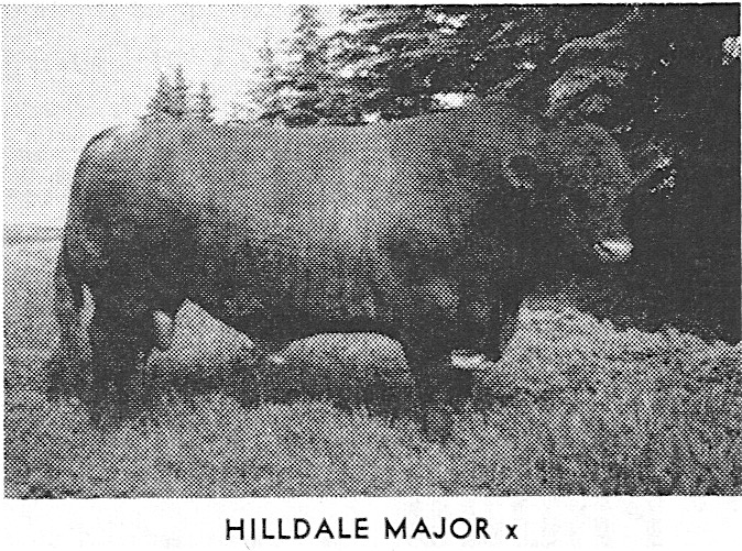 Hilldale Major--Sired by Hilldale Commander
