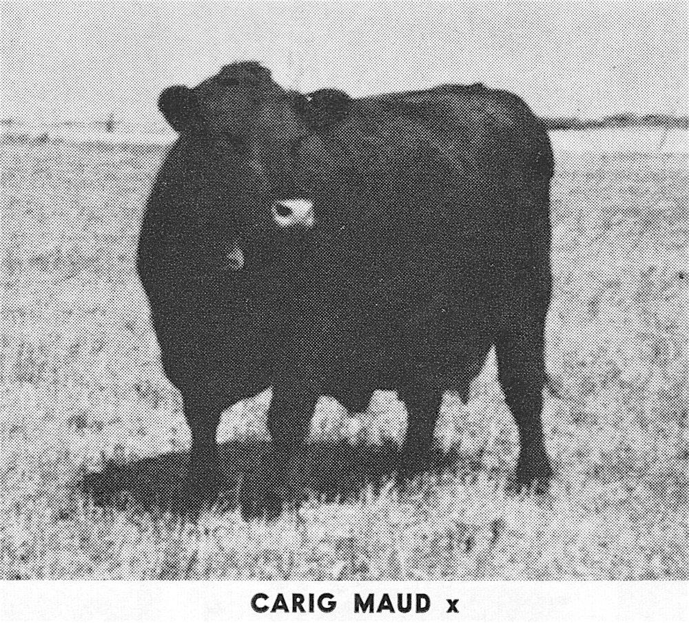 Carig Maud