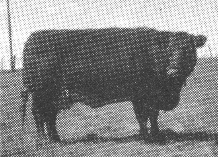 NonPariel Lady 163--Dam of TPS Coronet Leader 21st