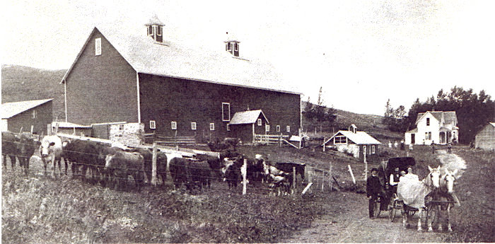 Shorthorns, 1910