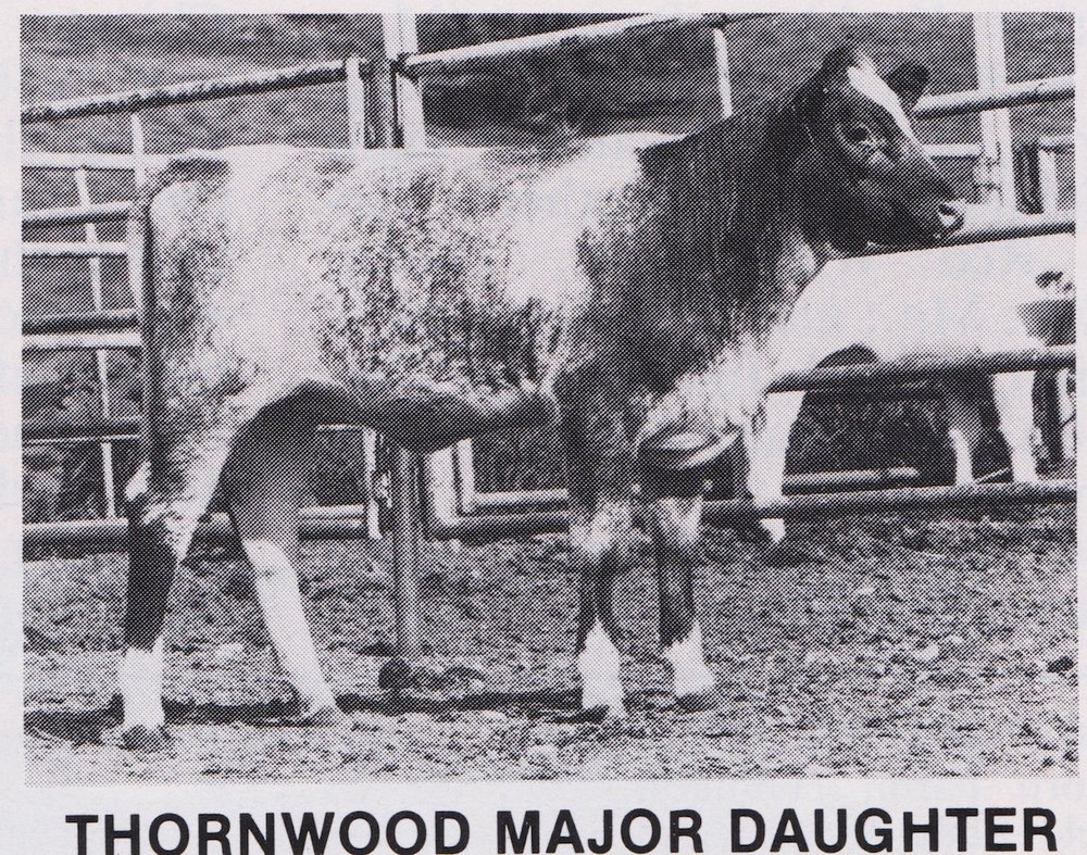 Daughter of Thornwood Major