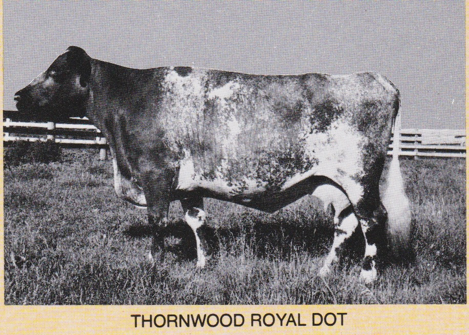 Thornwood Royal Dot, at 16 yrs.  Dam of Thornw. Royal Teri, Thornw. Major, and Abraham