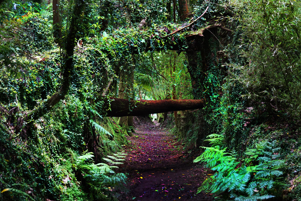 ...follow the path
