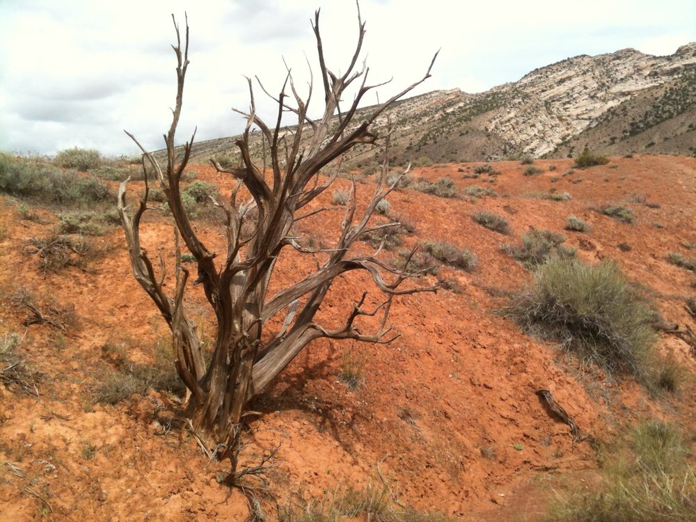 A tree growing out of the arid earth in Utah.