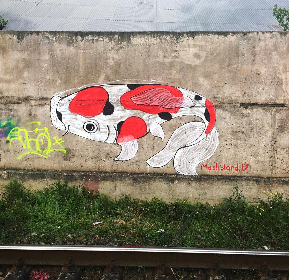 Koi Fish Masholand (4).JPG