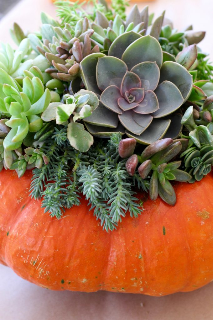 PumpkinClass.jpg