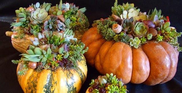 succulent+pumpkin.jpg