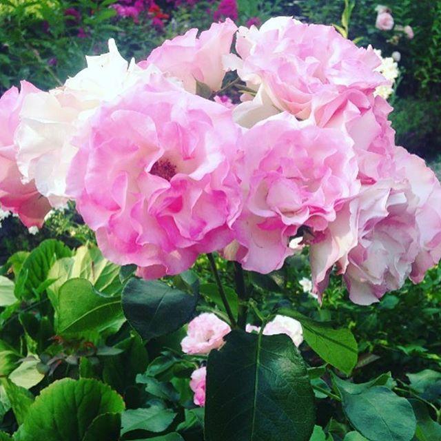 Gratitudine nel Cuore / Gratitude in the Heart 💟 #LaCasadellaGioia #Gratitudine #Gratitude #Joyful #Summer #PositiveVibrations #VibrazioniPositive #Gioia #Joy #InfiniteLove
