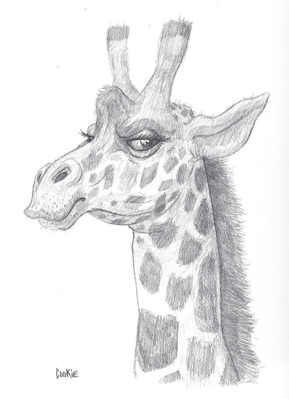 giraffe_2018.jpg