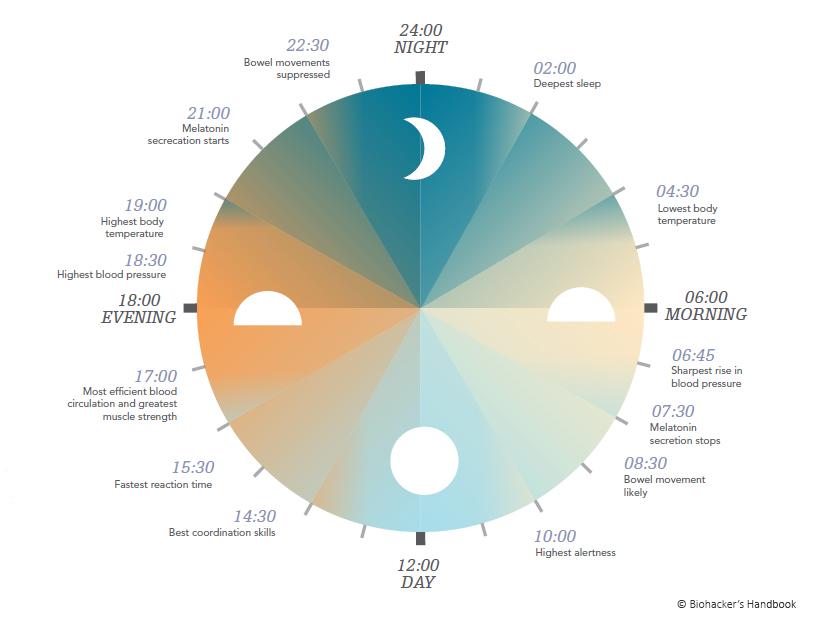 melatonin 24 clock .jpg