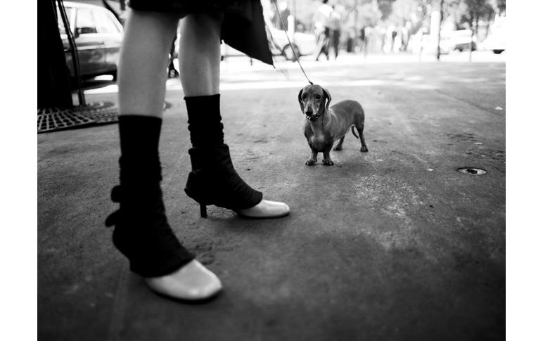 The dog in Paris