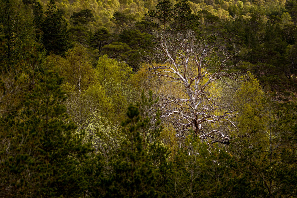 The varied trees that cover the whole length of the glen. The odd dead one mixing it up...