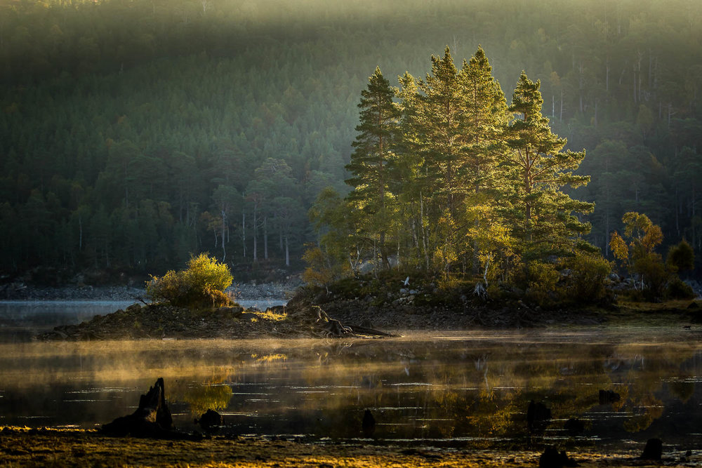 Sunlight filtering through the pines and catching the mist on the water.