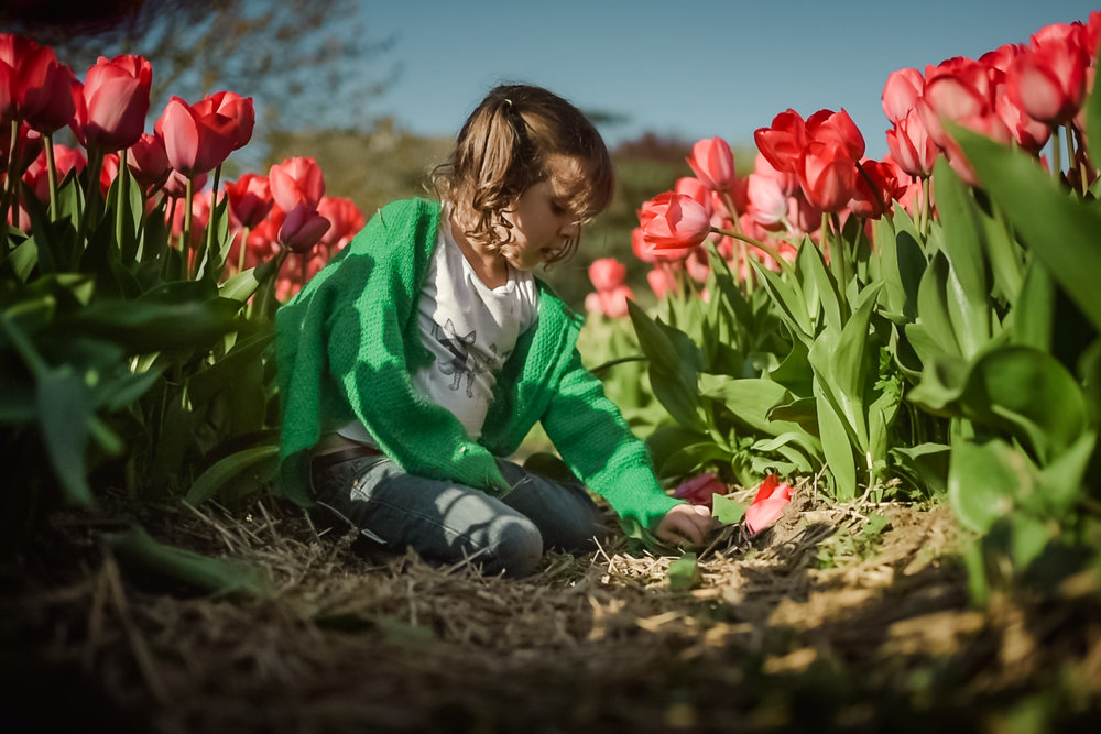 spring family session tulips pick-up amsterdam child photographer anita perminova