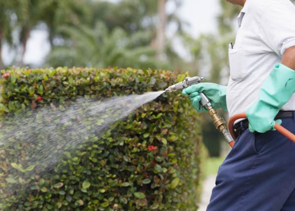 lawn-mowing-service-okc.jpg