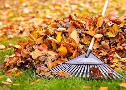 grass-cutting-services.jpg