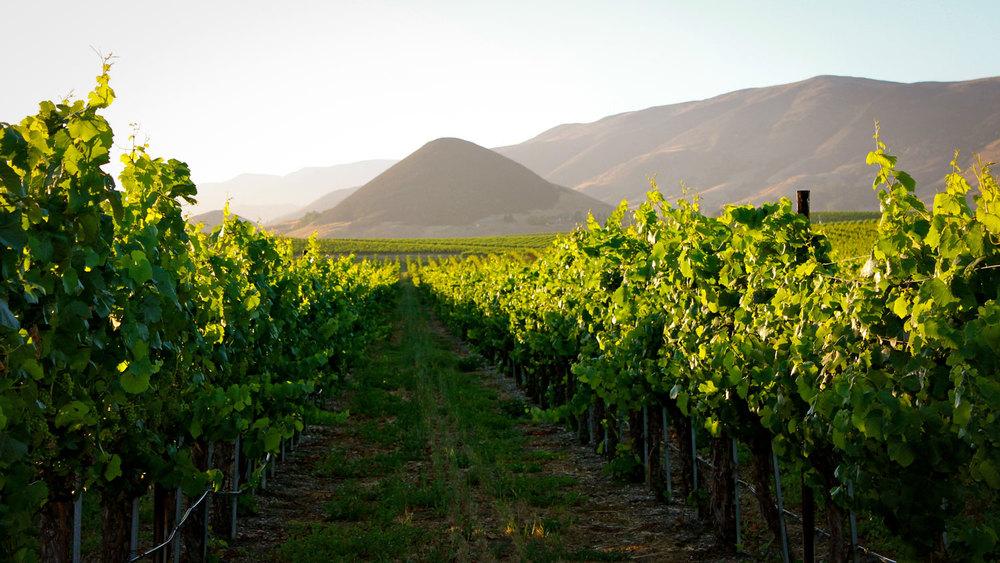 vineyard-slo-winery.jpg