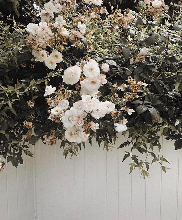Fresh blooms via @emmaleger 🌼 #blackswanclothing