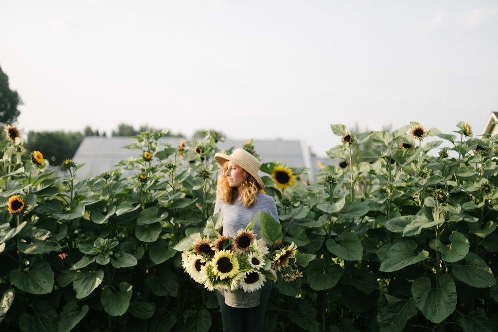 Jimena-Peck-Denver-Lifestyle-Editorial-Photographer-Native-Hill-Farm-Flowers-Sunflowers