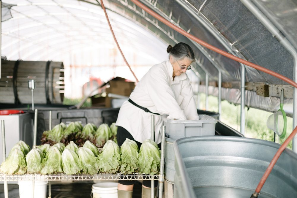 Jimena-Peck-Denver-Lifestyle-Editorial-Photographer-Native-Hill-Farm-The-Veggies-Washing-Lettuce