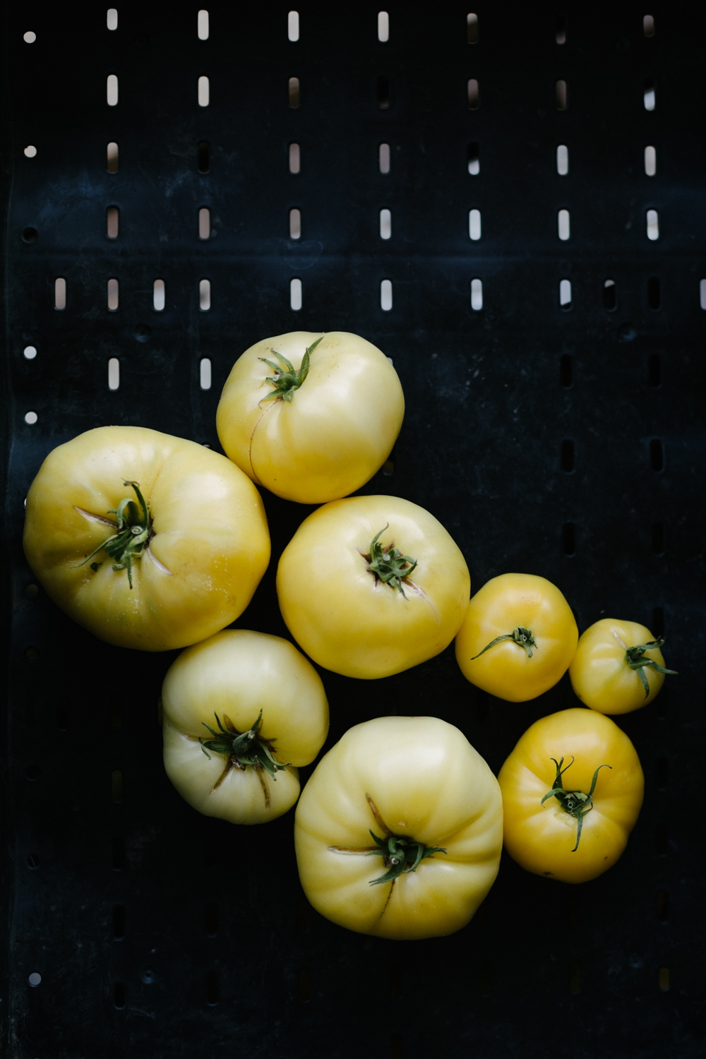 Jimena-Peck-Denver-Lifestyle-Editorial-Photographer-Native-Hill-Farm-The-Veggies-Yellow-Tomatoes