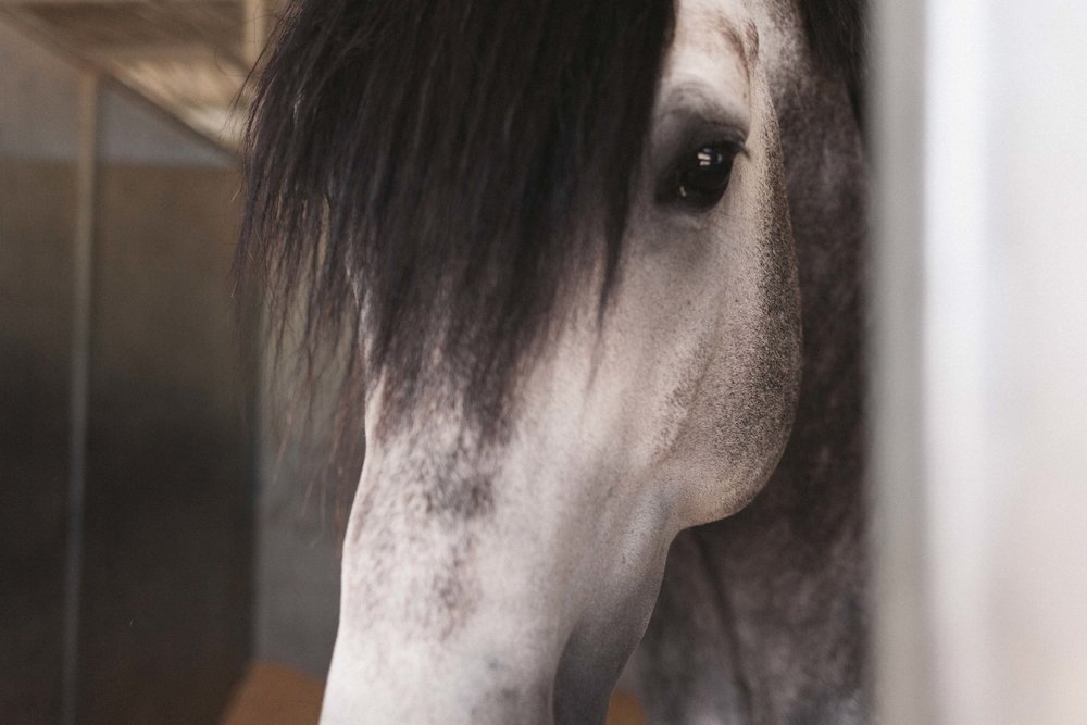 Jimena-Peck-Denver-Lifestyle-Editorial-Photographer-Colorado-Horse-Park-Mandy-Porter-For-Mastermind-Deep-Eyes-Fringe