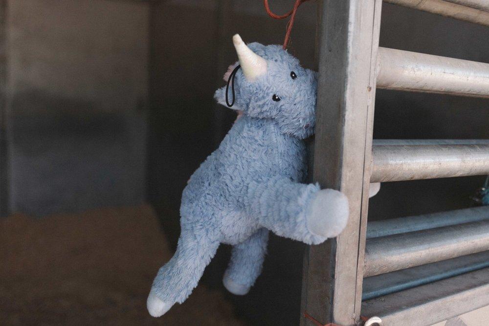 Jimena-Peck-Denver-Lifestyle-Editorial-Photographer-Colorado-Horse-Park-Mandy-Porter-For-Mastermind-Teddy-Bear