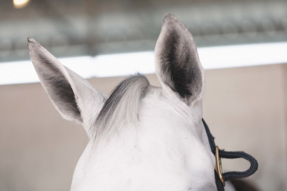 Jimena-Peck-Denver-Lifestyle-Editorial-Photographer-Colorado-Horse-Park-Mandy-Porter-For-Mastermind-Horse-Ears