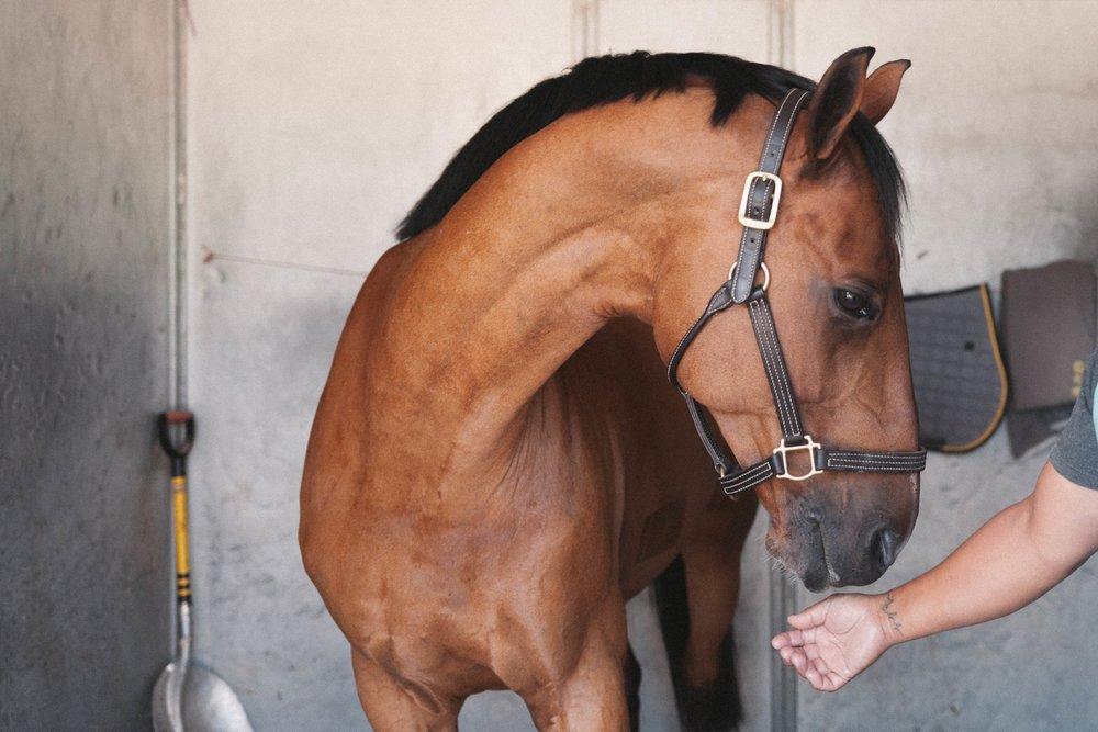 Jimena-Peck-Denver-Lifestyle-Editorial-Photographer-Colorado-Horse-Park-Mandy-Porter-For-Mastermind-Perfect-Fur-Horse