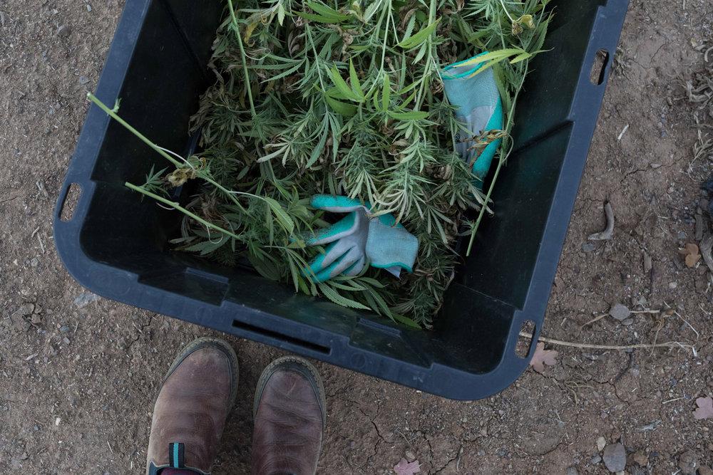 Jimena-Peck-Denver-Editorial-Commercial-Lifestye-Photographer-Farms--40.jpg