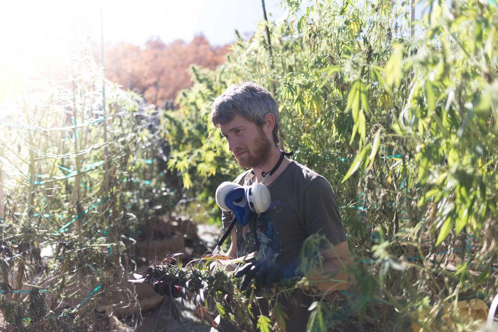 Jimena-Peck-Denver-Editorial-Commercial-Lifestye-Photographer-Farms--44.jpg