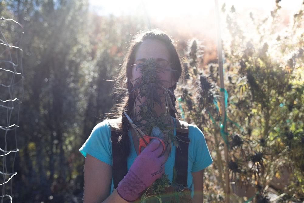 Jimena-Peck-Denver-Editorial-Commercial-Lifestye-Photographer-Farms--42.jpg