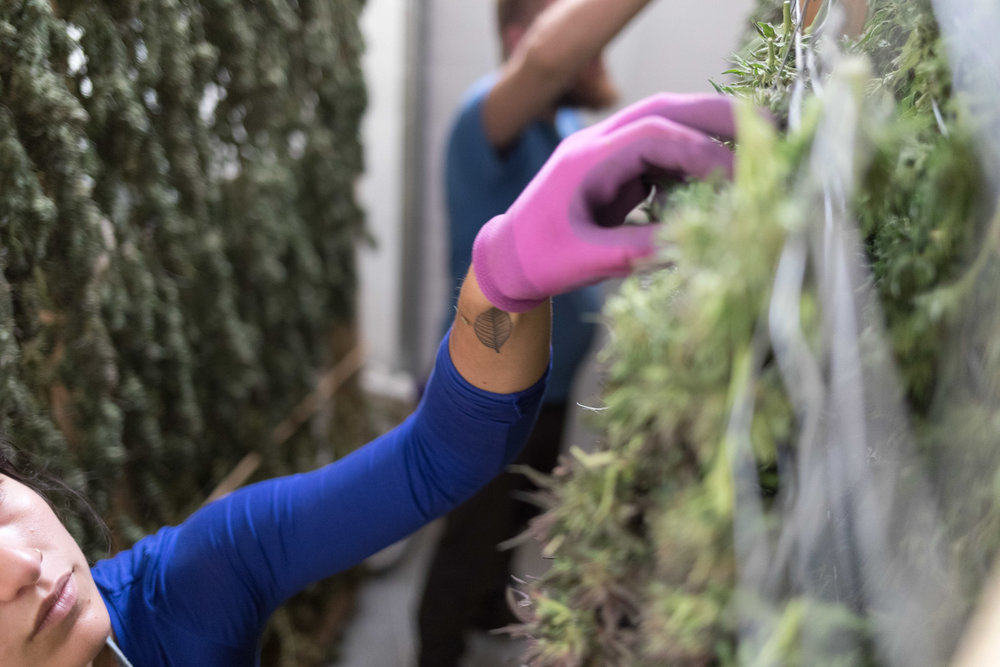 Jimena-Peck-Denver-Editorial-Commercial-Lifestye-Photographer-Farms--29.jpg