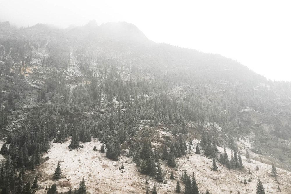 Jimena Peck Denver Lifestyle Editorial Photographer Mountain Pines