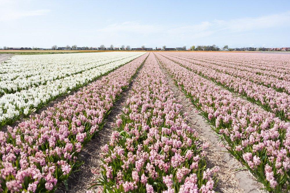 Jimena Peck Denver Lifestyle Editorial Photographer Big Flowers Field