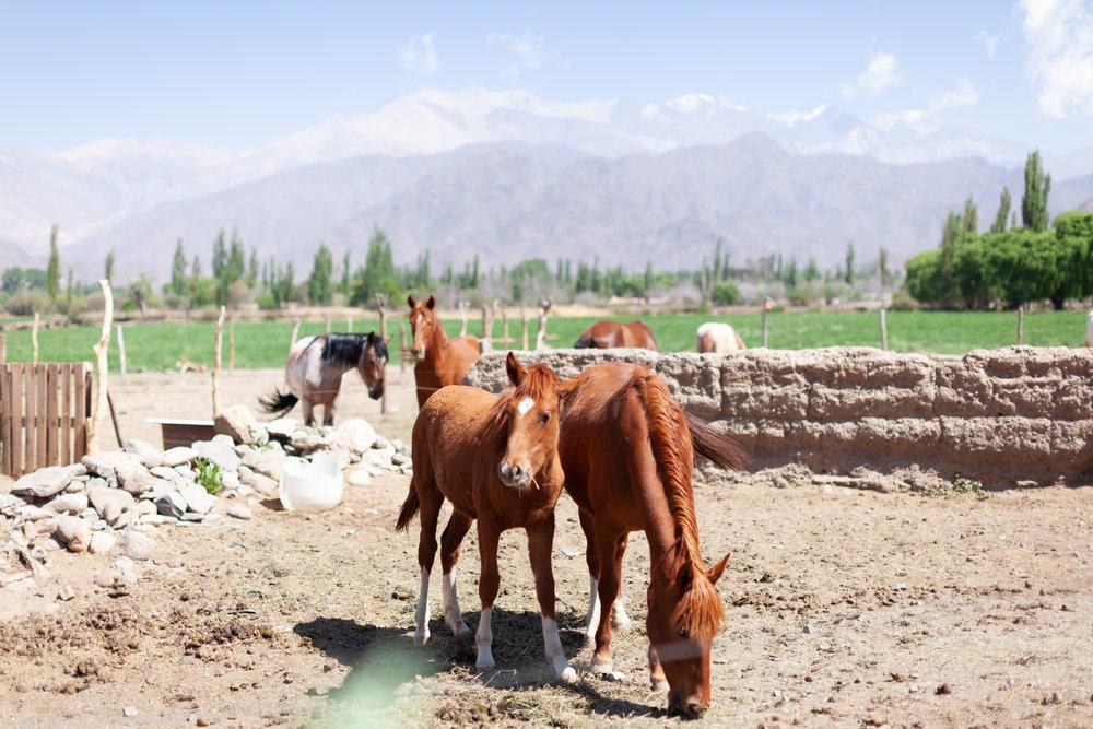Jimena Peck Denver Lifestyle Editorial Photographer Horses