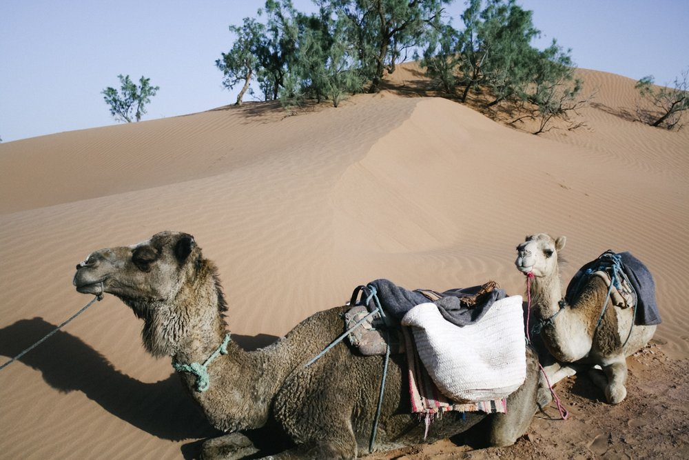 Jimena Peck Denver Lifestyle Editorial Photographer Camels Desert