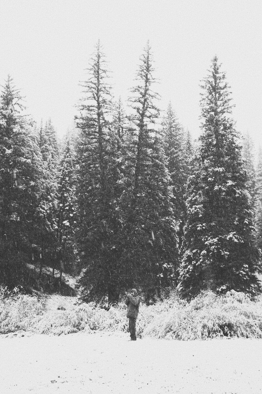 Jimena Peck Denver Lifestyle Editorial Photographer Snow Pine Trees