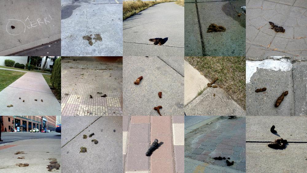 Poop_all.jpg