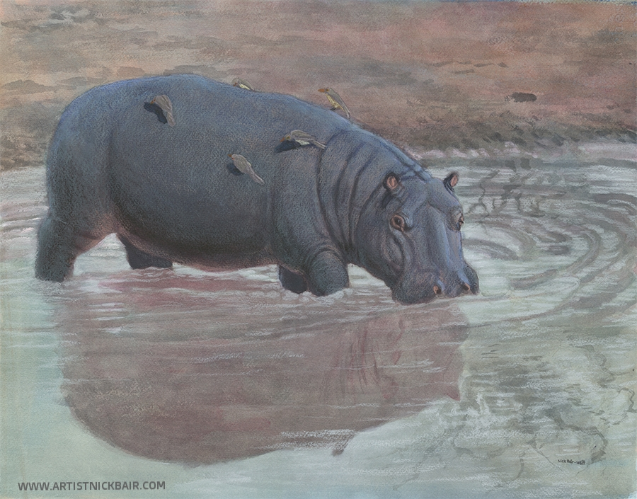 Hippopotamus and Her Reflection