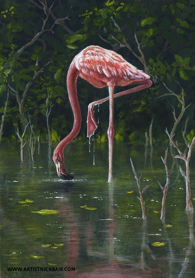 Flamingo Grazing
