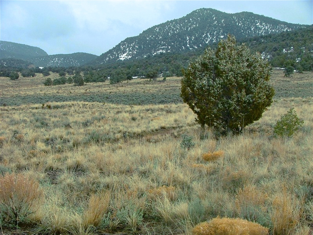 This lush grass and brush, post treatment, provides more than 1,000 pounds of wildlife food per acre than in the previous pinion juniper stand. By treating millions of acres of habitat, much of which is funded in partnership with sportsmen groups and energy companies, we can make herds bigger and off set or mitigate any impacts of development.