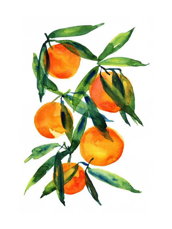 tangerines dzh.jpg