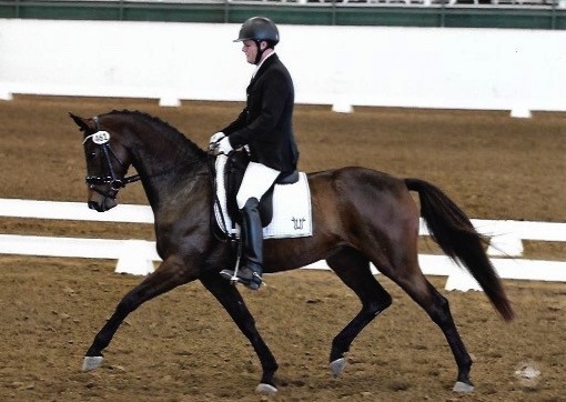 Matt Cunningham Dressage    Enter