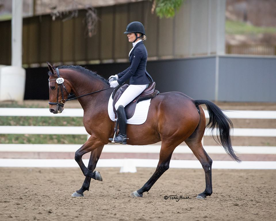 Spooktacular 10.29.16-10.30.16 Matt and Taylor debuted in the California show ring at The Spooktacular Halloween Dressage Show at the Del Mar Horse Park....