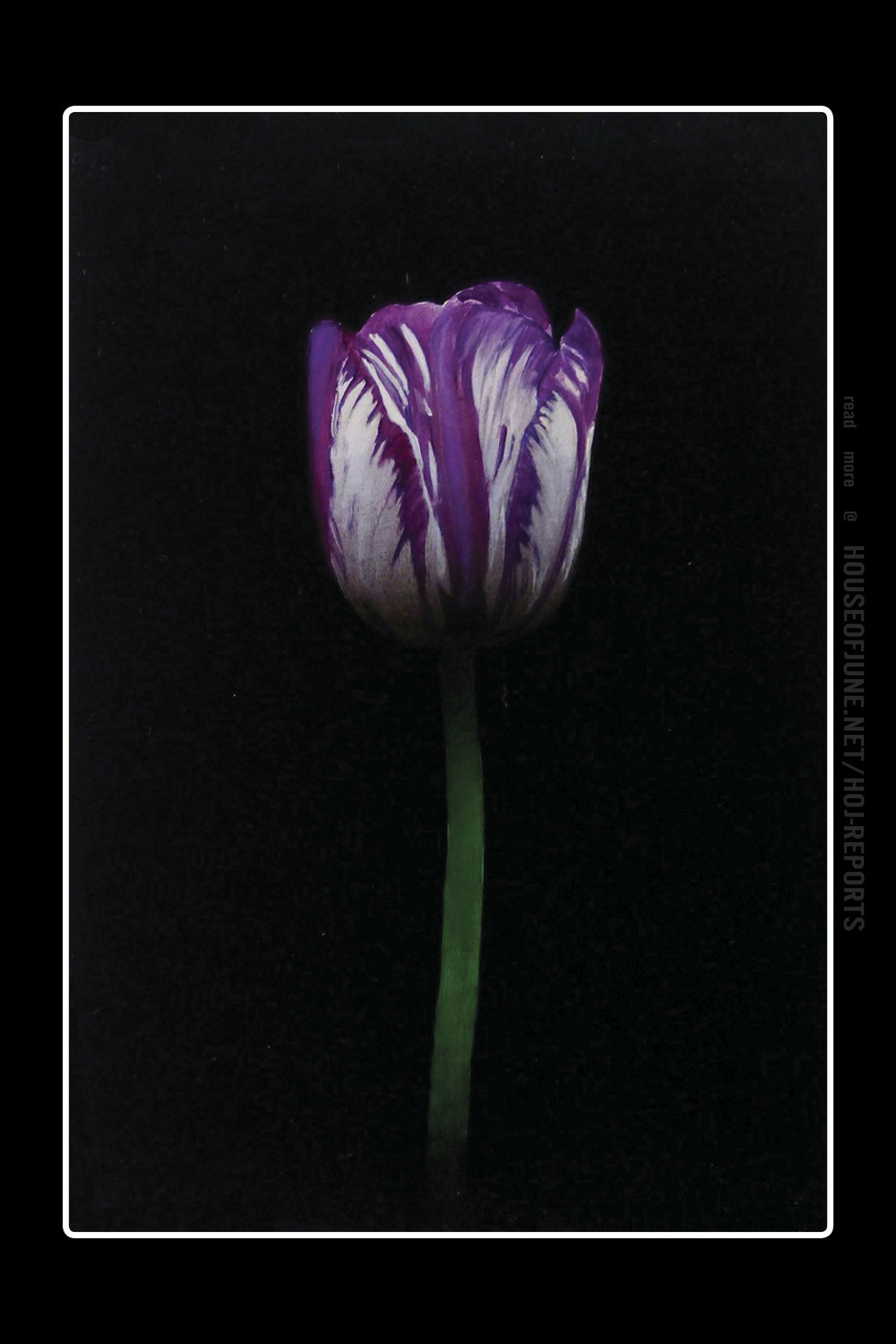 Michael Gregory   (Oil on Panel)  Purple and White Tulip