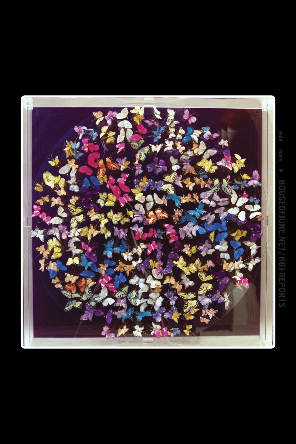Michael Olsen   (Feather and Acrylic Paint Behind Perspex)  Butterflies, Purple, 2016
