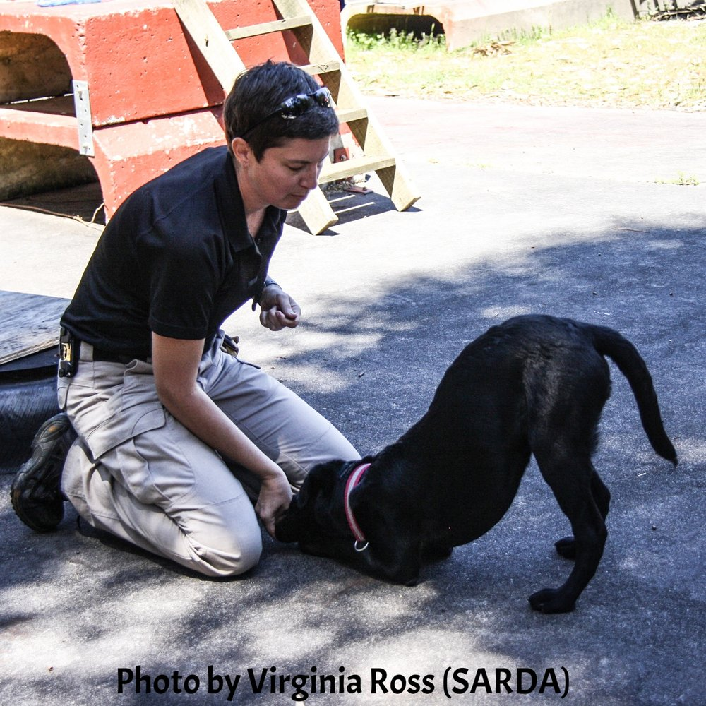 "Tracy Darling demonstrates exercises to help keep working dogs fit with 5 month old K9 Ferr""Ari"" (SARDA)"