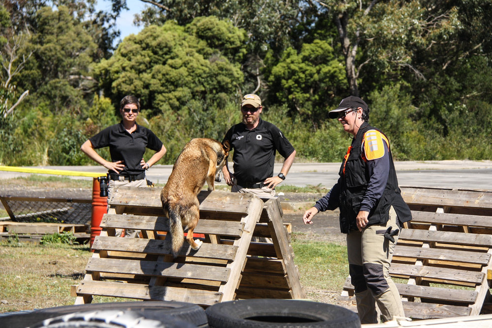 Tracy and Eric observe K9 Boof with handler Adele Jago (Search Dogs Sydney) as they perform a series of agility elements
